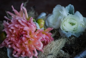 bi-color peach dahlias, pin on corsage, dahlia corsage, september wedding flowers, white ranunculus boutonniere
